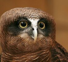 Rufous Owl by Ann  Van Breemen