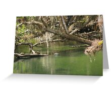 Turtles at Blue Springs Greeting Card