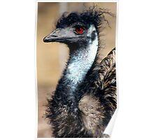 Emu Portrait Poster
