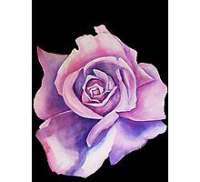 Blue Moon Rose Photographic Print