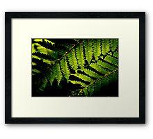 New Zealand Fern Framed Print