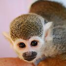 Squirrel Monkey  by laureenr