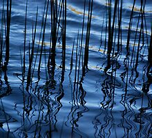Waves of Reeds by Adam Taylor