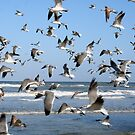 flock of seagulls by Ted Petrovits