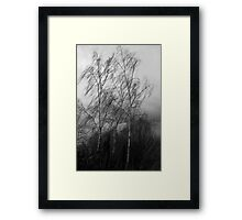 Trees in the wind Framed Print