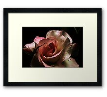 Blushing Rose Framed Print