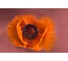 Papaver Rhoeas - Red Poppy Photographic Print