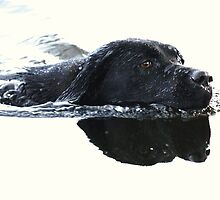 Summer swim by Alan Mattison