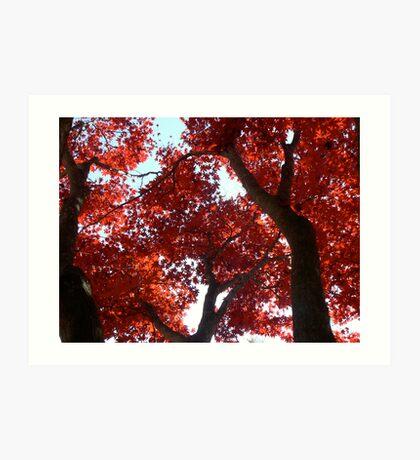 Magnificent Maple Art Print