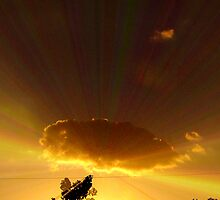 Golden Cloud by Lisa Taylor
