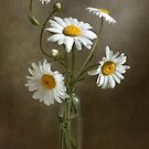 Daisies still life by Mandy Disher