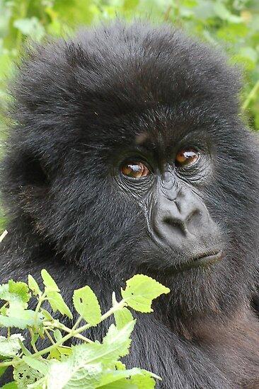 Mountain Gorilla by ApeArt