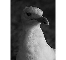 Wise Bird Photographic Print