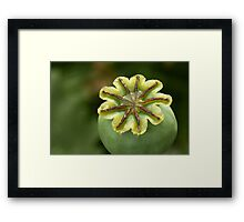 Wax ornament on top  Framed Print