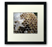 Almost born.... Framed Print