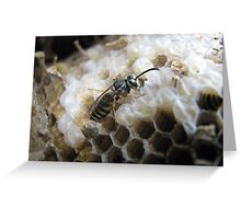A wasp is born Greeting Card