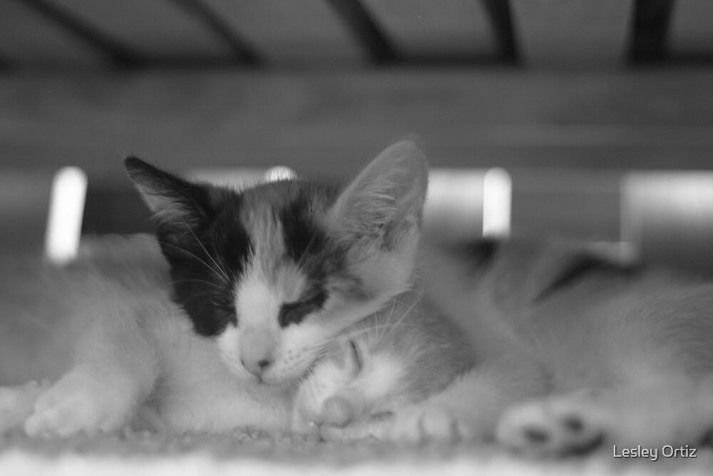 Special Kitties by Lesley Ortiz