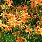 Flower field by Valeria Lee