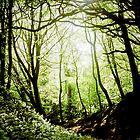 Wild Garlic Forest by DavidYates