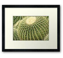 Round Cactus Framed Print