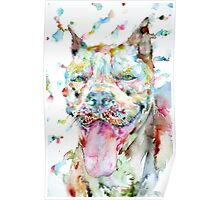 WATERCOLOR PIT BULL Poster