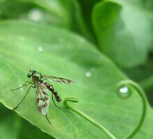 Lil green fly by LisaDuniam