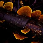 Fluro Fungi by TraceyLea