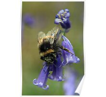 Bumble On The Bluebell Poster