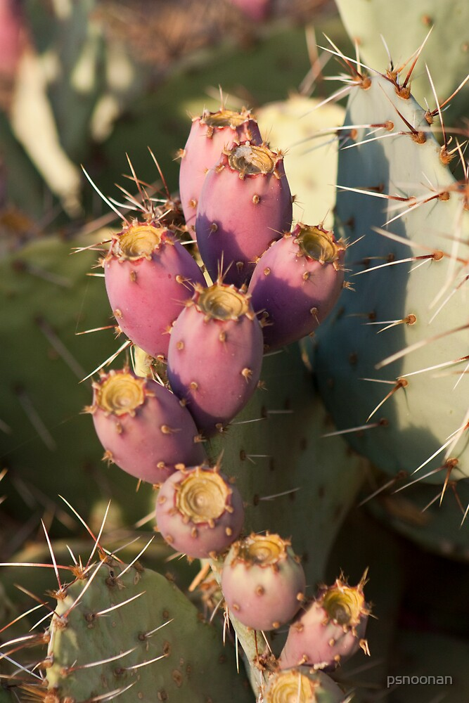Prickly Pear Cactus by psnoonan