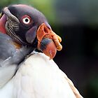 King Vulture by Wayne Gerard Trotman