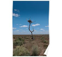 The nest tree, Hay plains. Poster
