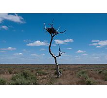 Lone tree, very lonely nest Photographic Print