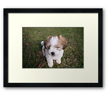 Innocent Puppy in Corindi Beach, New South Wales Framed Print