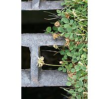Overgrown Sewer Gate Photographic Print