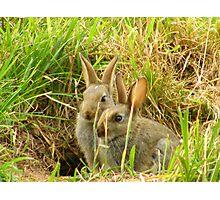 baby bunny bros Photographic Print