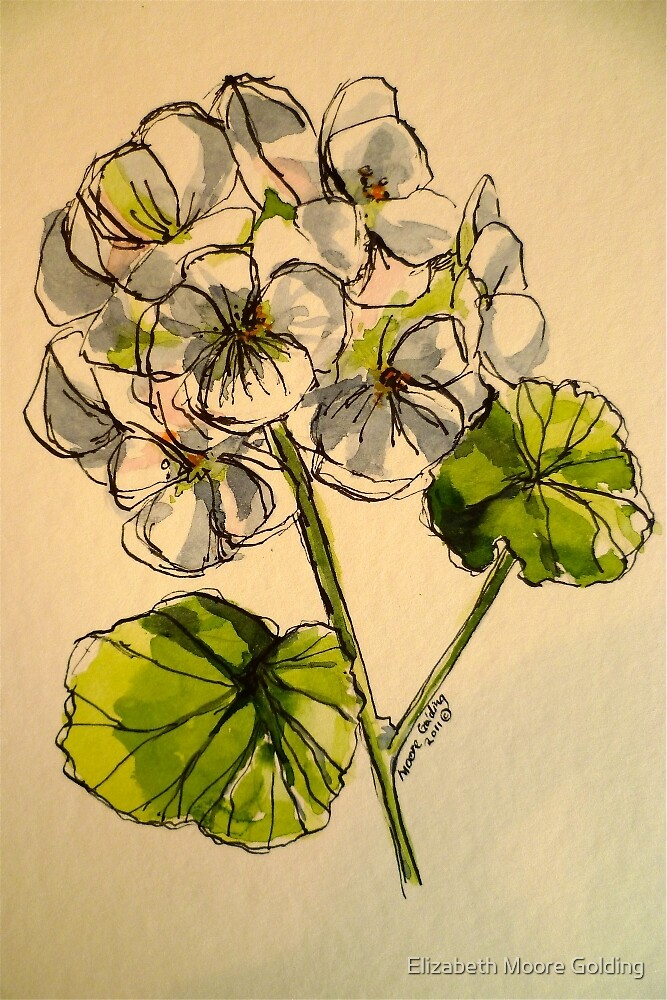 White geranium. Pen and wash on paper. by Elizabeth Moore Golding