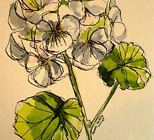 White pelargonium. Pen and wash on paper. by Elizabeth Moore Golding