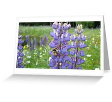 Busy Bee in the Meadow, Purple Lupins in Vermont Greeting Card