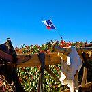 Where Longhorns Die! by Jeff Blanchard