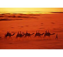Broome Camels Photographic Print