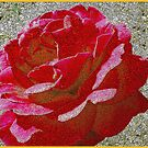Red Rose in Texture by Rosalie Scanlon
