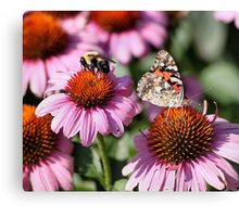 'Painted Lady and Bumble Bee' Canvas Print