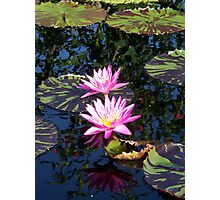 Two Lilies on a pond Photographic Print