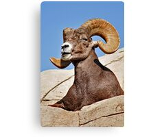 Majestic Ram Canvas Print