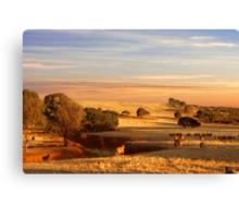 Sheep Grazing at Sunset - Kanmantoo, South Australia Canvas Print