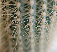 Cactus Textures by awanderingsoul
