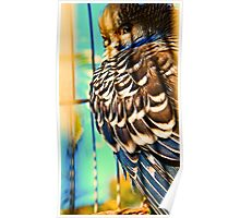 jubba the hut -my budgie - Shadow-Sun-Sleepy  Poster