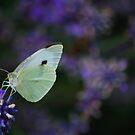 Lavender Haze by Rowan  Lewgalon