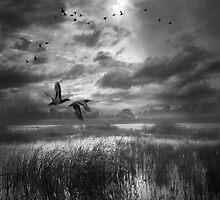 *** by Mikhail Zvonkov
