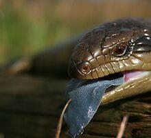 Blue tongue Lizard ....... by Nick Hunt